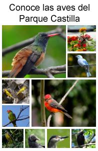 Conoce las aves del parque castilla