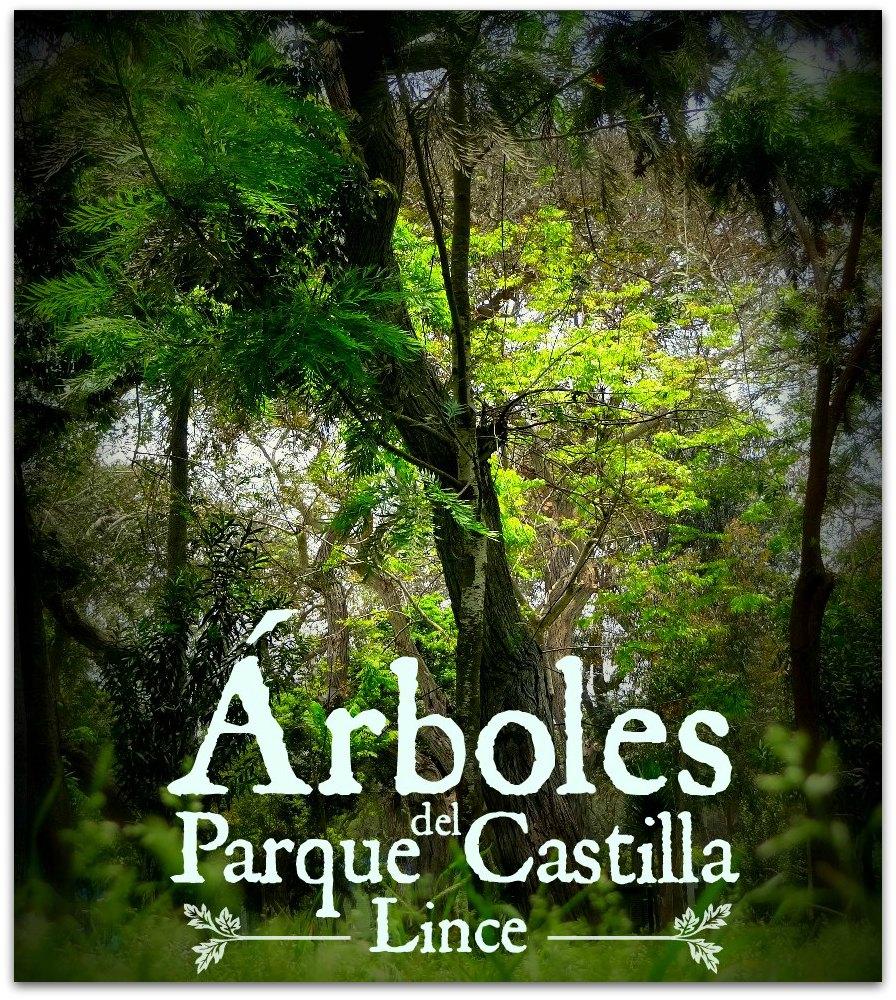 Conoce los árboles del Parque Castilla