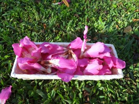 Flores del gran ceibo del Parque Castilla(Abril)