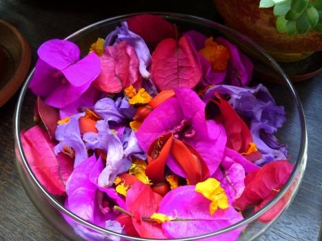Popurrit de flores del Parque Castilla: Buganvileas, jacarandás, tipas